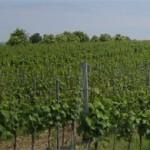 Warmup in der Weinremise mit exklusiven Weinen